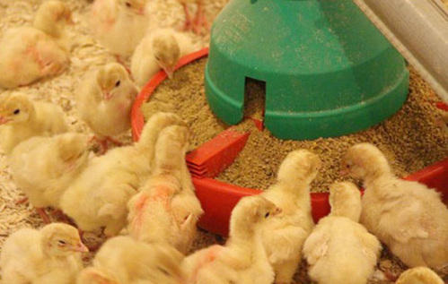 Organic soybean meal for livestock